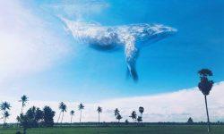 Aplikasi Mengedit Foto Ada Ikan Diatas Awan