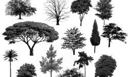 Brush Kumpulan jenis pohon