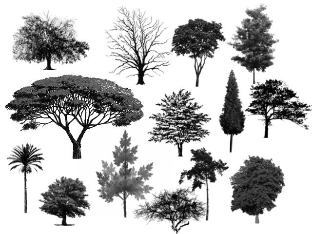 pohon Download Gratis: Brush Aura Keren